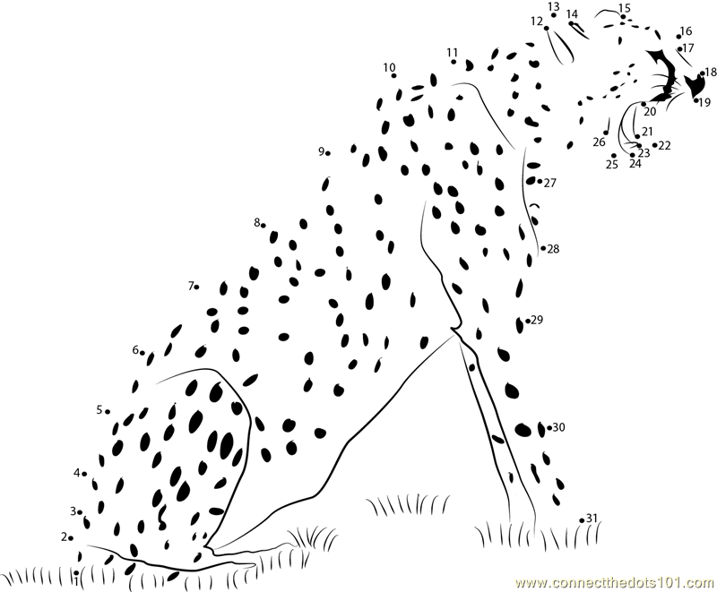 Animal State Cheetah dot to dot printable worksheet - Connect The Dots