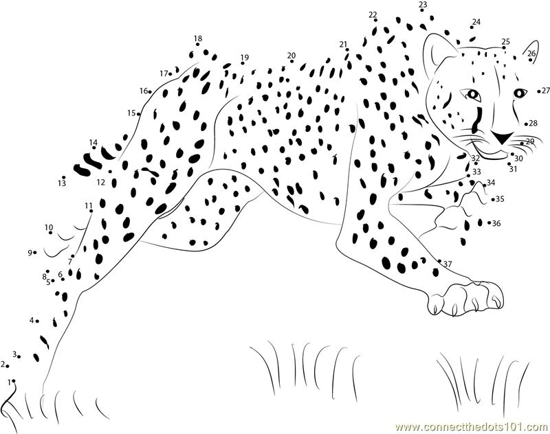 Bouncing Cheetah Dot To Dot Printable Worksheet
