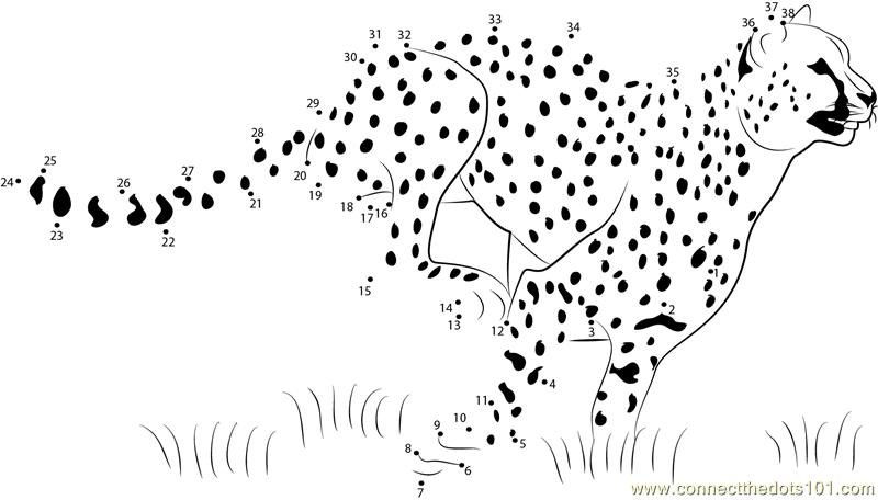 Cheetah Speed Running Dot To Dot Printable Worksheet