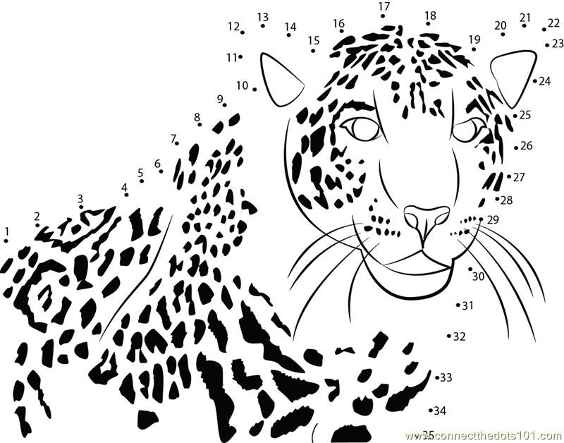 Fast Runner Cheetah Dot To Dot Printable Worksheet