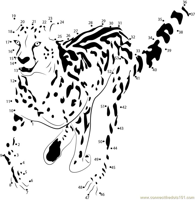 King Cheetah Run Dot To Dot Printable Worksheet Connect