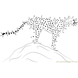 Adult Cheetah Standing