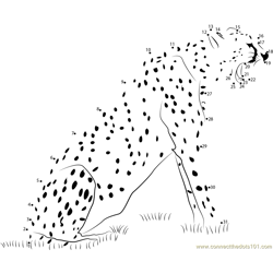 Animal State Cheetah