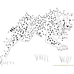 Bouncing Cheetah
