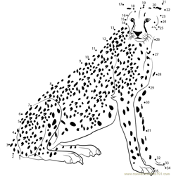 Cheetah Look at Me Dot to Dot Worksheet