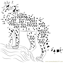 Cheetah Looking Dot to Dot Worksheet