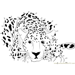 Cheetah Sitting Dot to Dot Worksheet