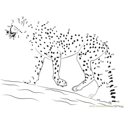Cheetah Walk Dot to Dot Worksheet