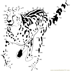 King Cheetah Run Dot to Dot Worksheet