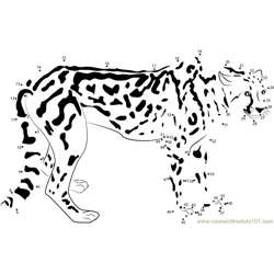 King Cheetah Dot to Dot Worksheet