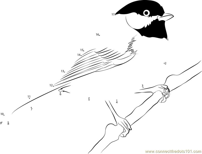 Black Capped Chickadee Winter Dot To Dot Printable