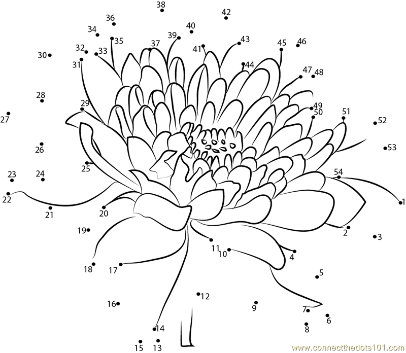 Chrysanthemum dot to dot printable