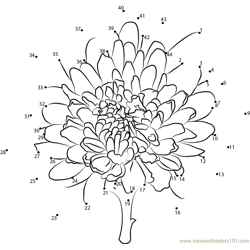 Chrysanthemum Dot to Dot Worksheet