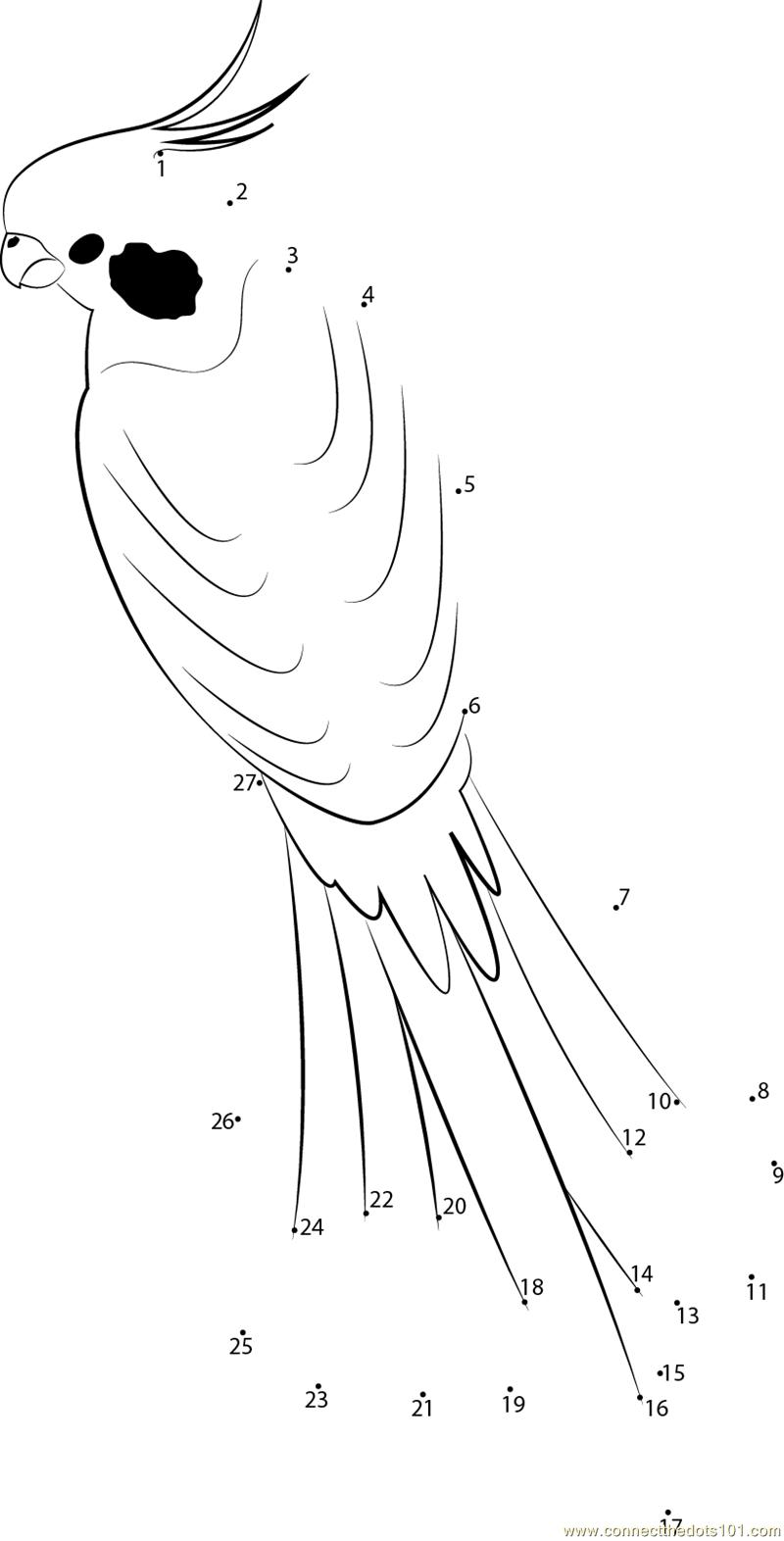 Male Cockatiel dot to dot printable