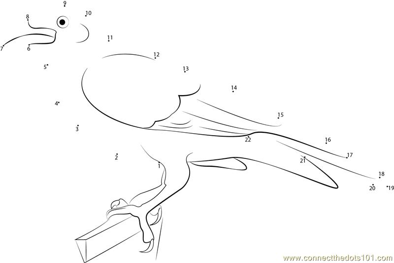 Adult Raven Dot To Dot Printable Worksheet