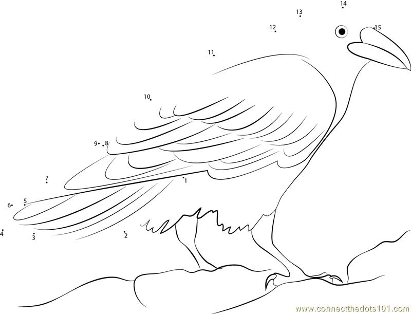 Raven Bird At Muir Beach Dot To Dot Printable Worksheet