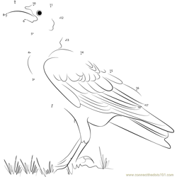 White Necked Raven Dot to Dot Worksheet