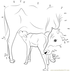 Indian Cow and Calf Dot to Dot Worksheet