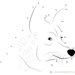 Coyote Face Dot to Dot Worksheet