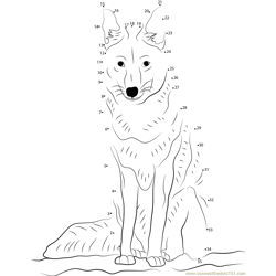 Coyote Looking Dot to Dot Worksheet
