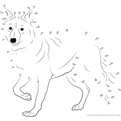 Coyote Dot to Dot Worksheet