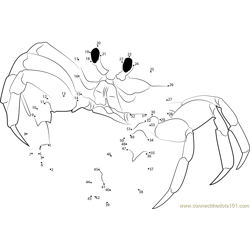 Florida Ghost Crab Dot to Dot Worksheet