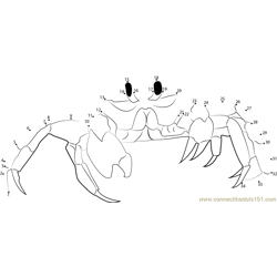 Ghost Crab Dot to Dot Worksheet