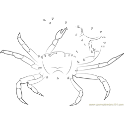 Gulf Mud Fiddler Crab Dot to Dot Worksheet