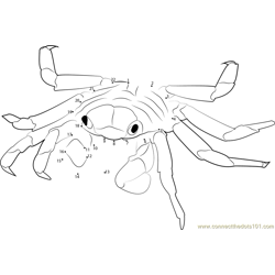Sally Lightfoot Crab Dot to Dot Worksheet
