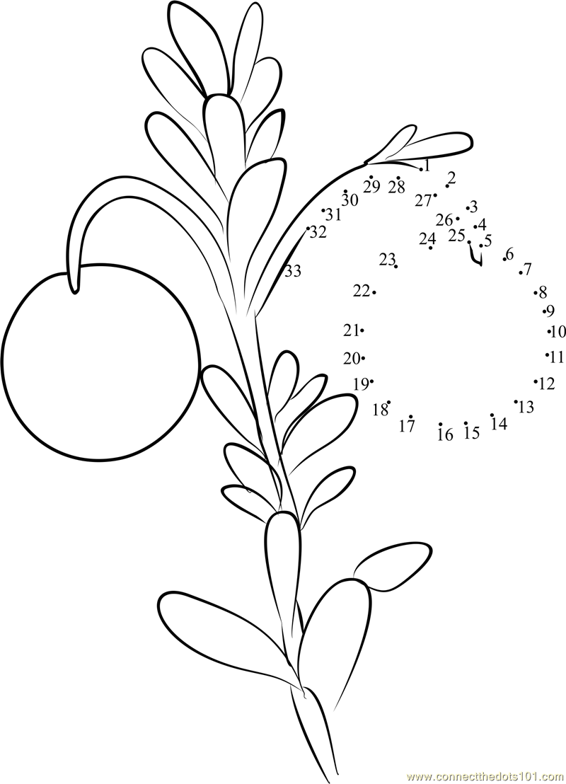 cranberry coloring pages kids - photo#14