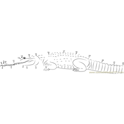 Fresh Water Crocodile Dot to Dot Worksheet