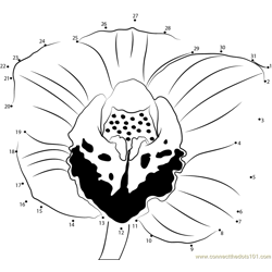 Cymbidium Orchid Dot to Dot Worksheet