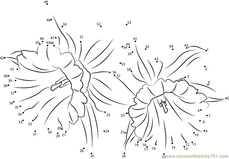 Daffodil Flower Dot To Dot Printable Worksheet