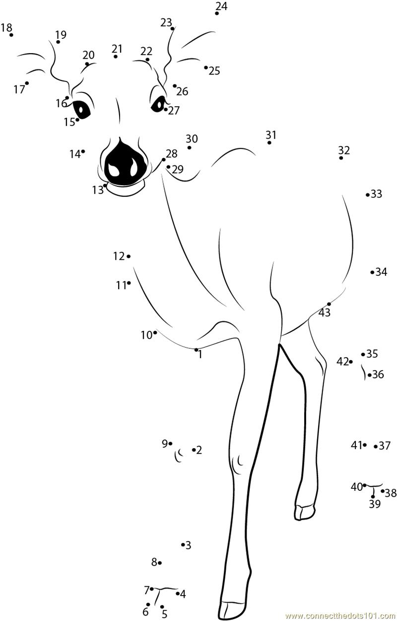 formosan sika deer dot to dot printable worksheet