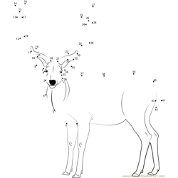 Beautiful Deer Dot to Dot Worksheet