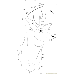Buck Deer Dot to Dot Worksheet