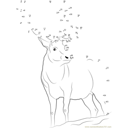 Looking Deer Dot to Dot Worksheet