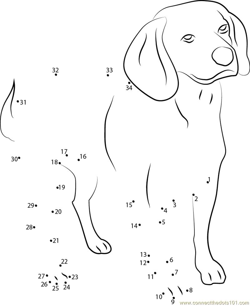 beagle english purebred dog dot to dot printable worksheet connect the dots. Black Bedroom Furniture Sets. Home Design Ideas