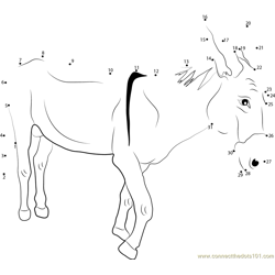 Donkeys Breeds Dot to Dot Worksheet