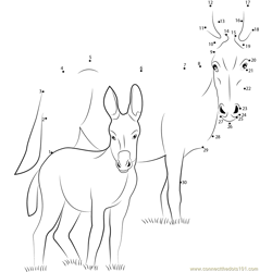 Ponui Donkey Dot to Dot Worksheet