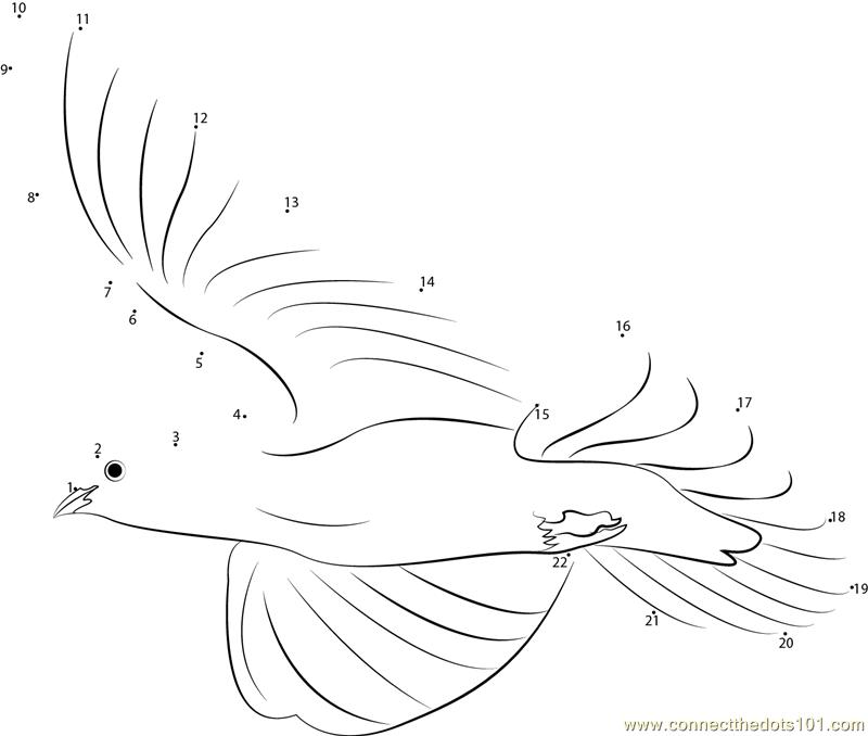 White Dove Bird Flight Dot To Dot Printable Worksheet
