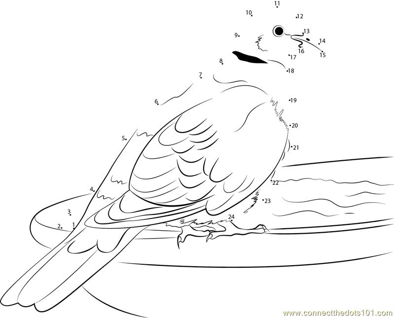 Wildlife Birds Collared Dove Dot To Dot Printable Worksheet
