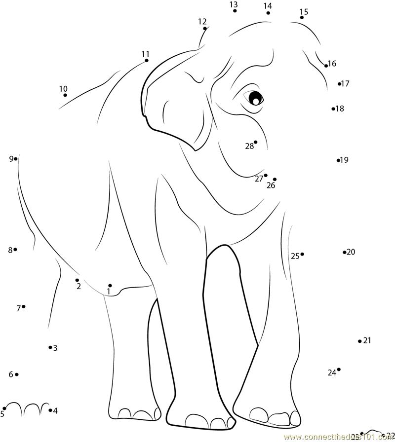 male asian elephants