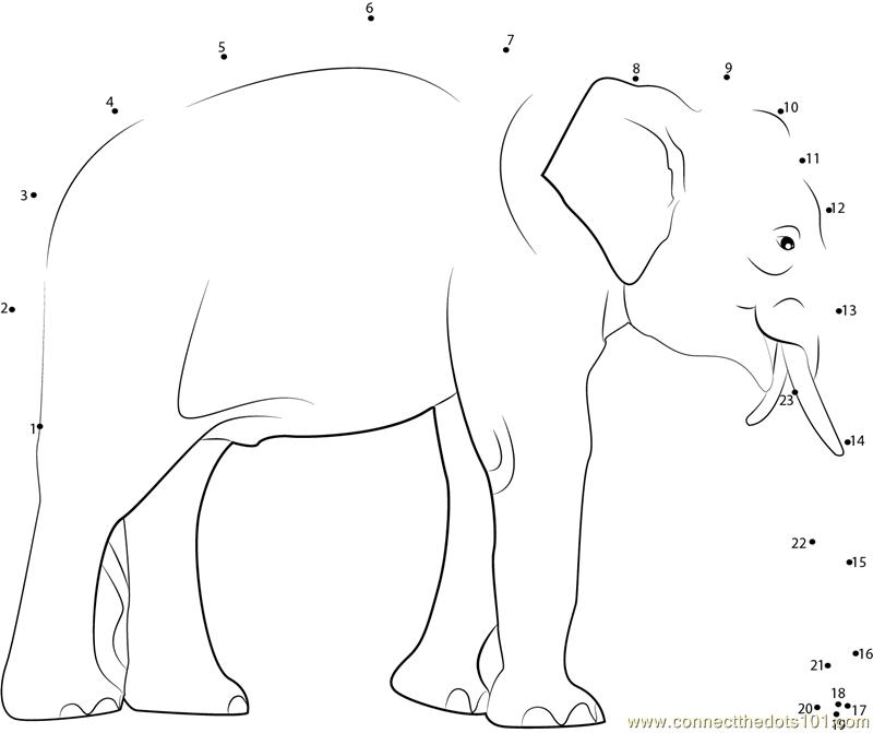 Elephant Dot To Dot Worksheet : Male indian elephant dot to printable worksheet
