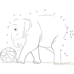 Elephant Play Football