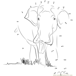 Wild Elephant Dot to Dot Worksheet