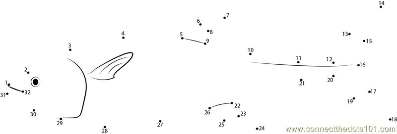 Long Fish Dot To Dot Printable Worksheet