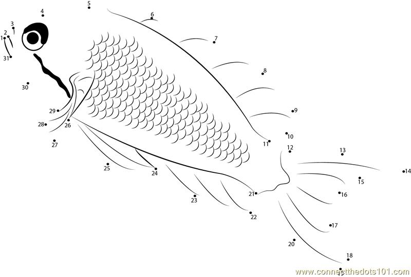 Lyretail Anthias Fish Dot To Dot Printable Worksheet