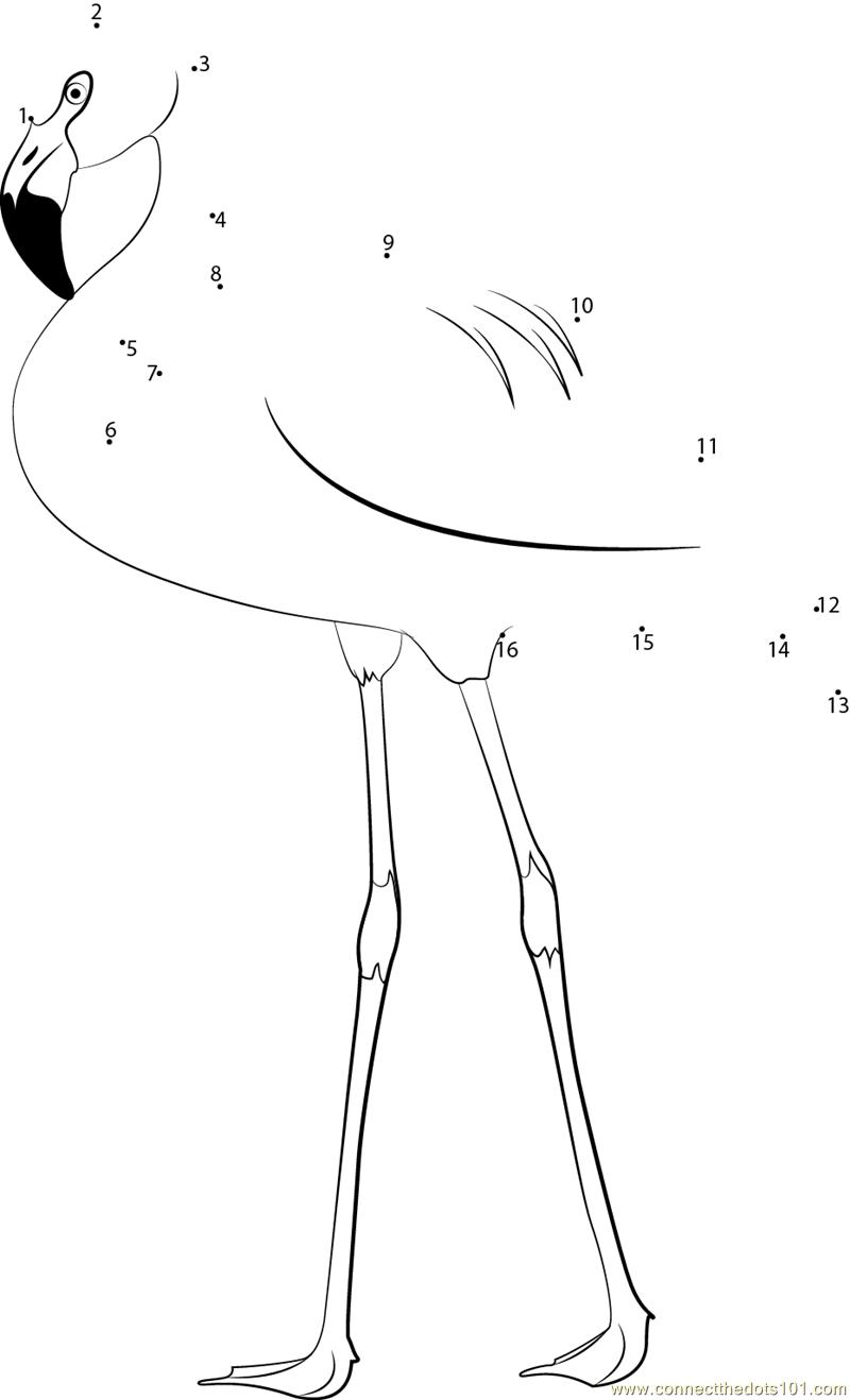 Chilean Flamingo dot to dot printable worksheet Connect