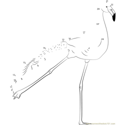 Flamingo Bird Dance Dot to Dot Worksheet